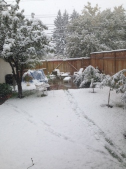 Backyard in Calgary