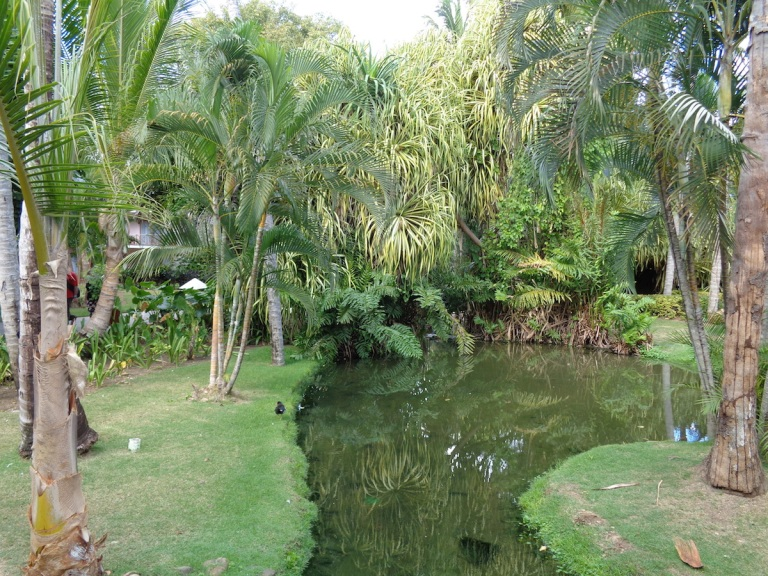 Winding pond