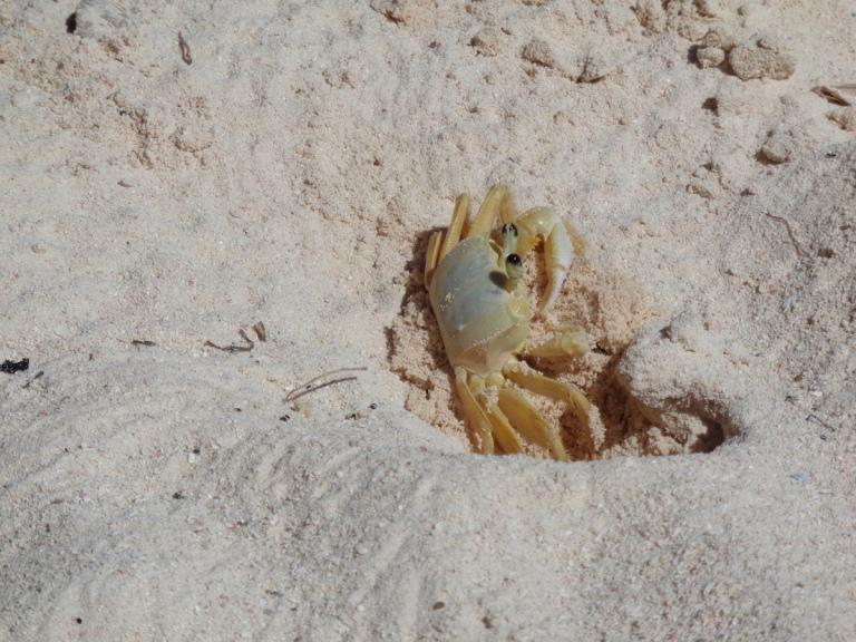 Sand friend